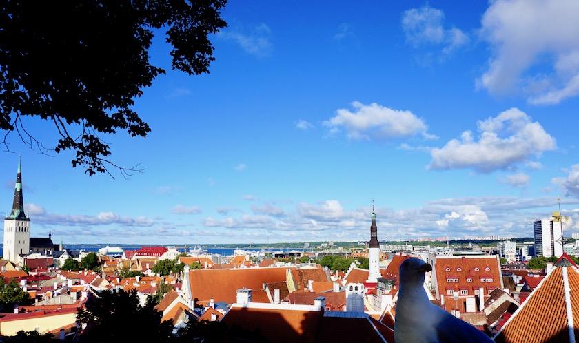 Tallinn Aussicht vom Domberg