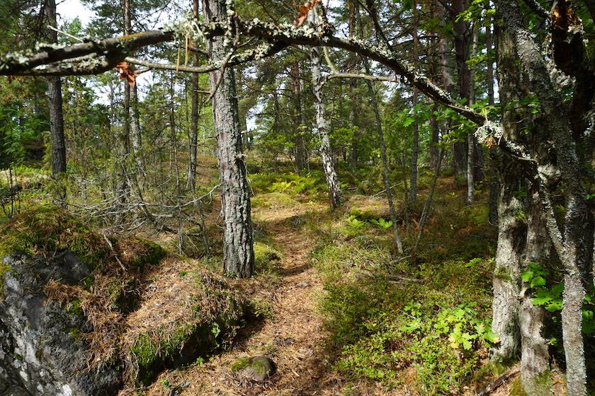 Västervik Resort Lysingsbadet Campingplatz_Schweden3