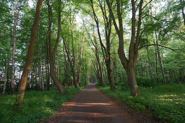 Kühlungsborn Stadtwald
