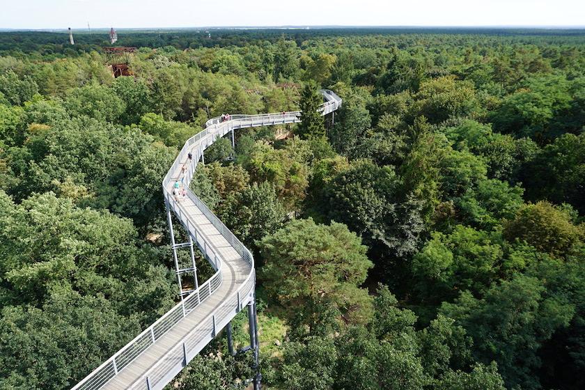 Baumkronenpfad Brandenburg