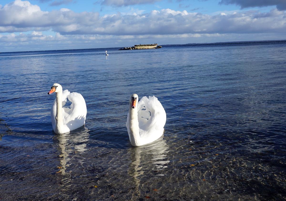 Boltenhagen Familienurlaub Ostsee Weiße Wiek