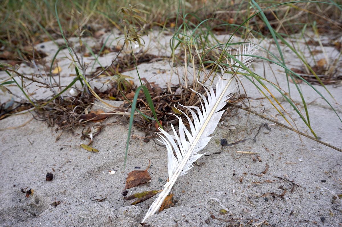 Ostsee im Herbst, Boltenhagen, Strandgut