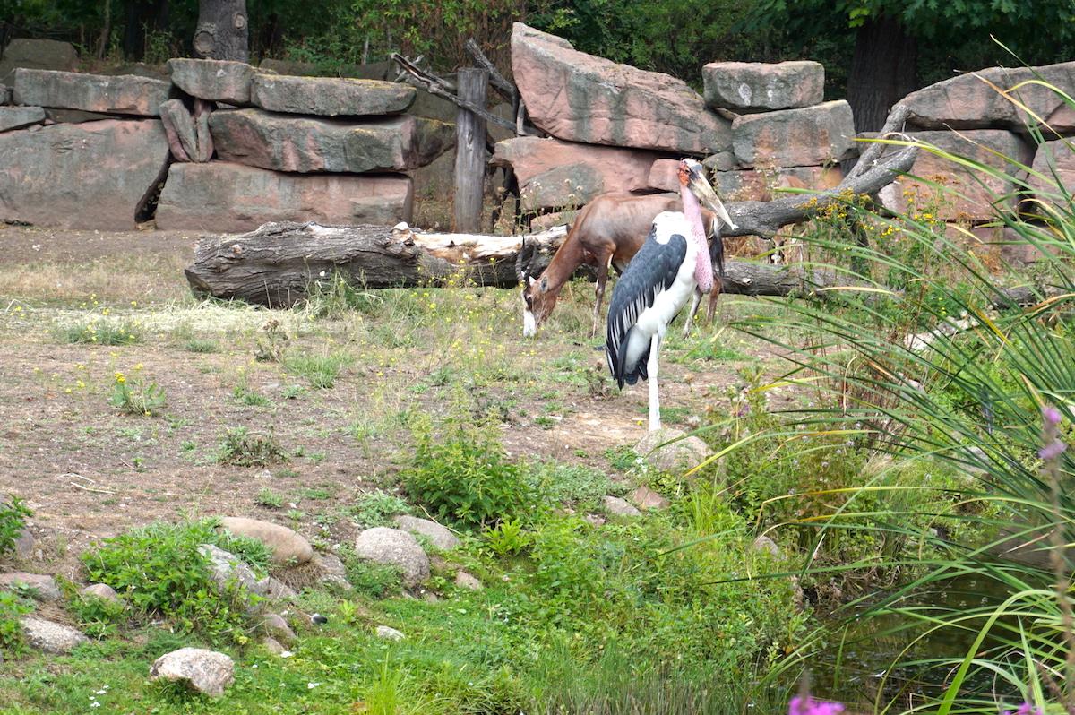 Magdeburg mit Kind, Zoo