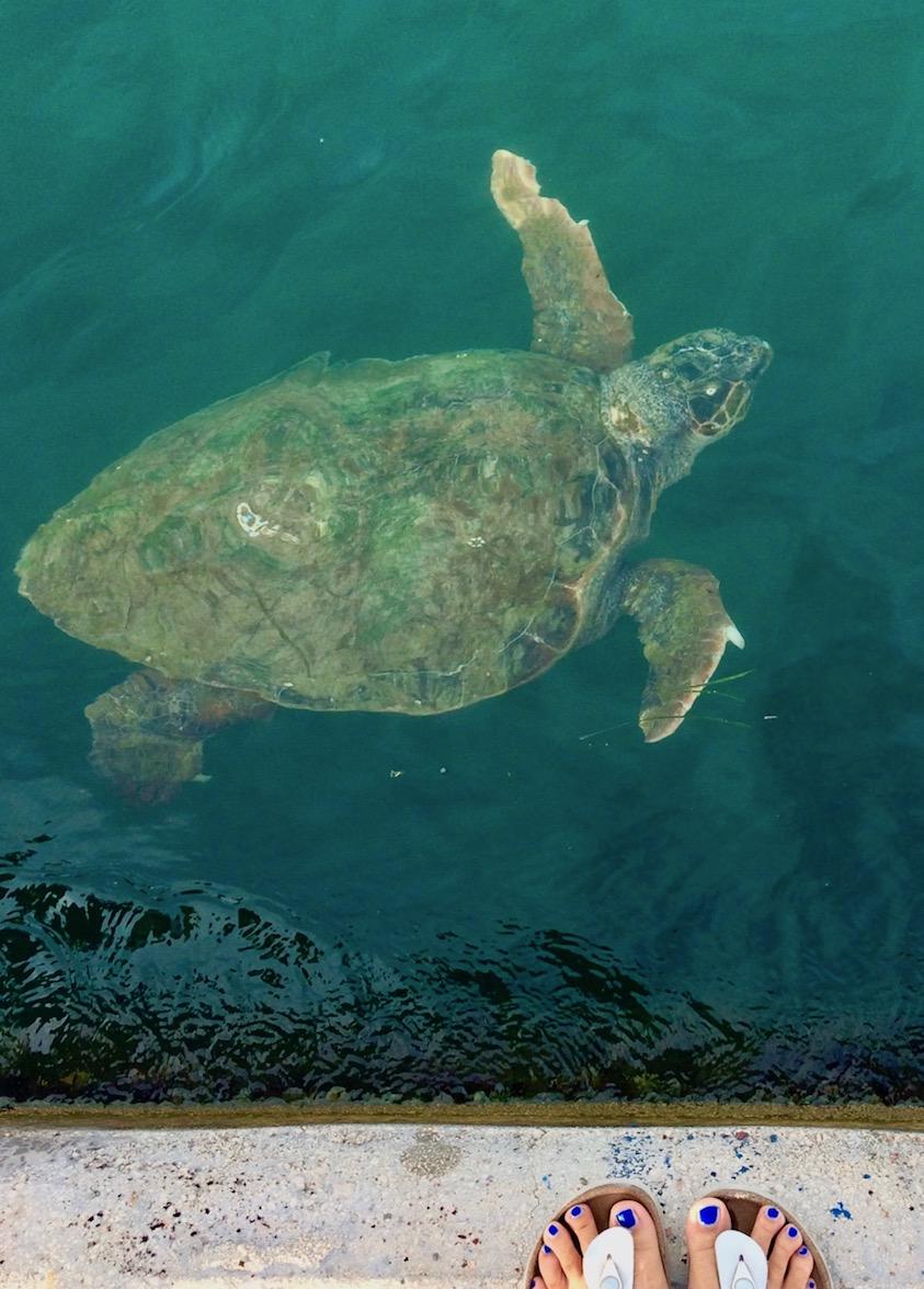 Meeresschildkröte Argostoli Kefalonia