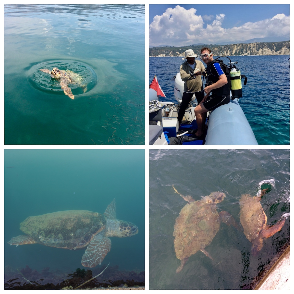 Schildkröten Griechenland Kefalonia