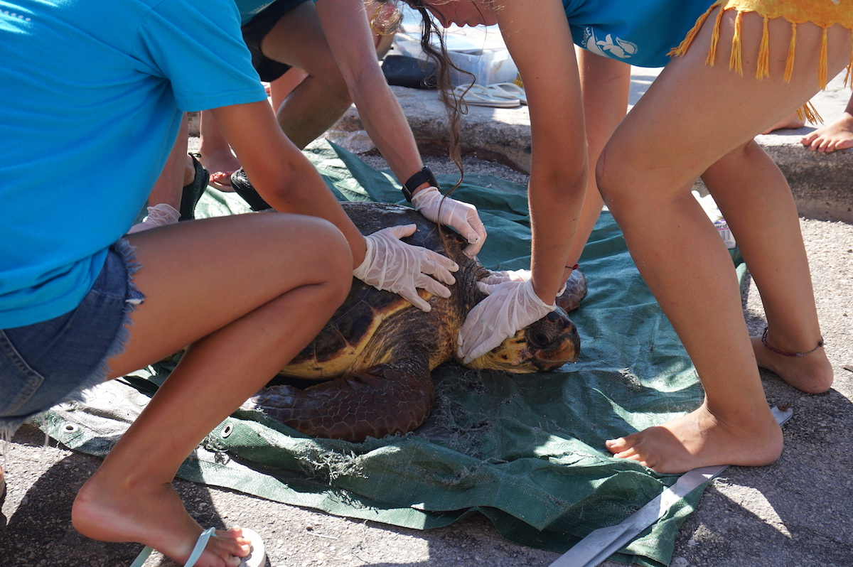 Schildkröten Griechenland Kefalonia3