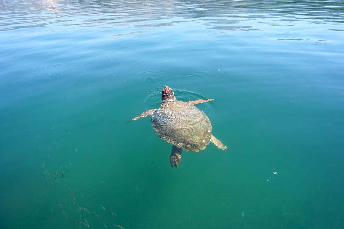 Schildkröten Kefaloni Griechenland