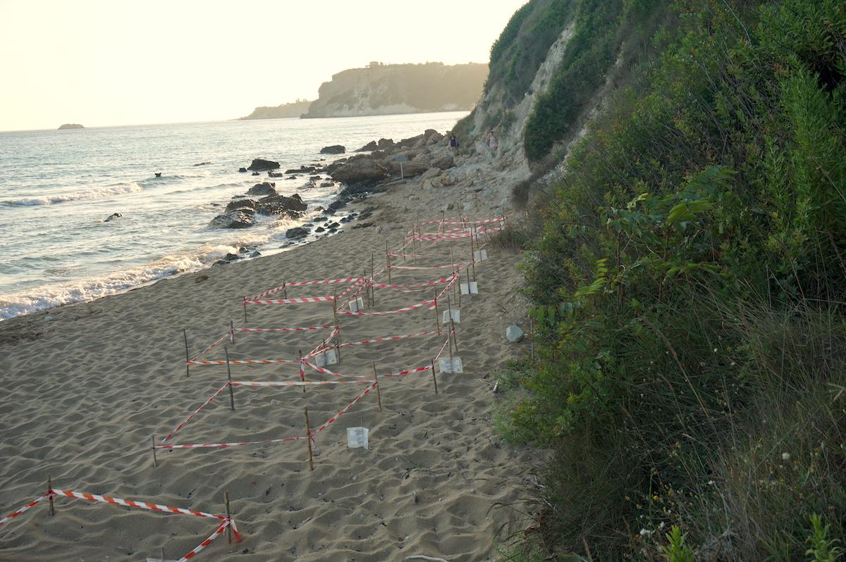 griechenland schildkröte caretta caretta brutplätze