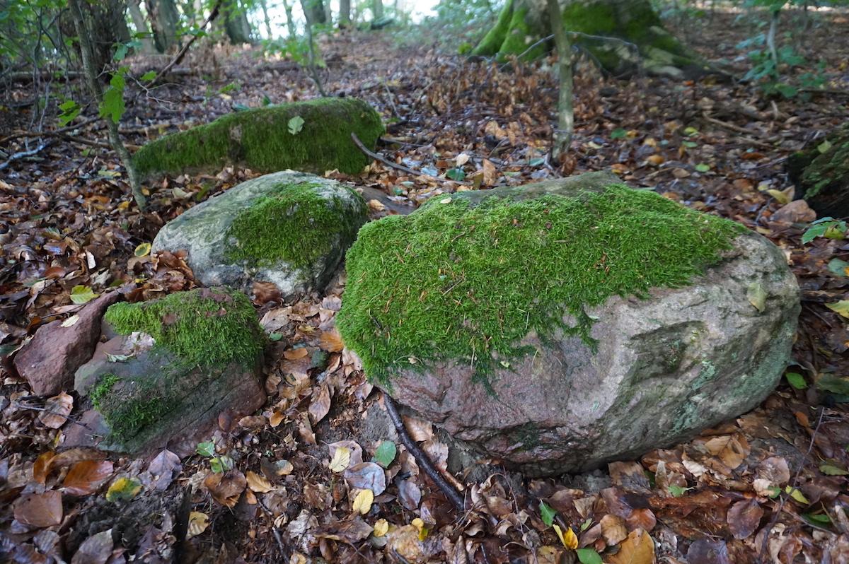 Grumsiner Forst, Wanderung Urwaldpfad