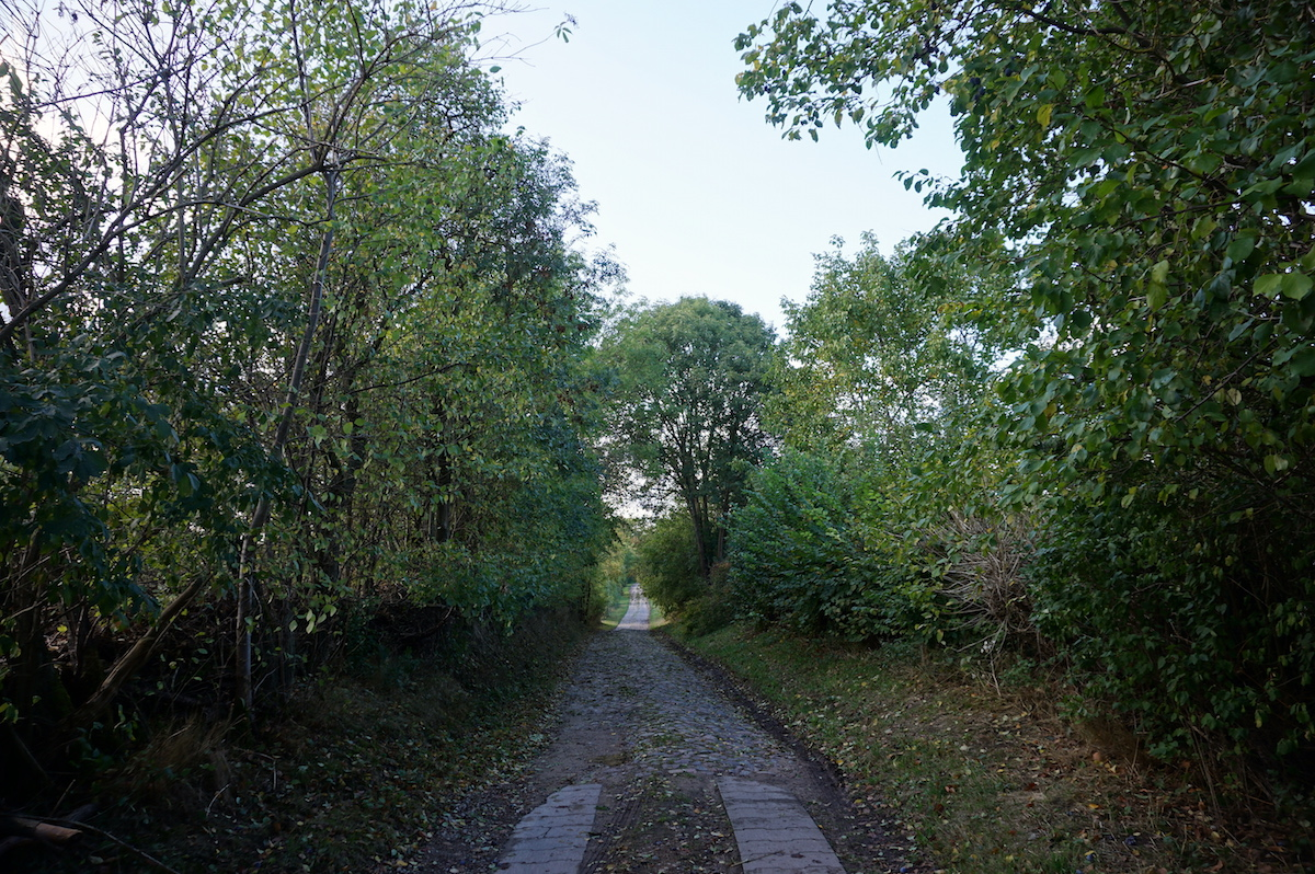Buchenwald Weltnaturerbe Grumsiner Forst