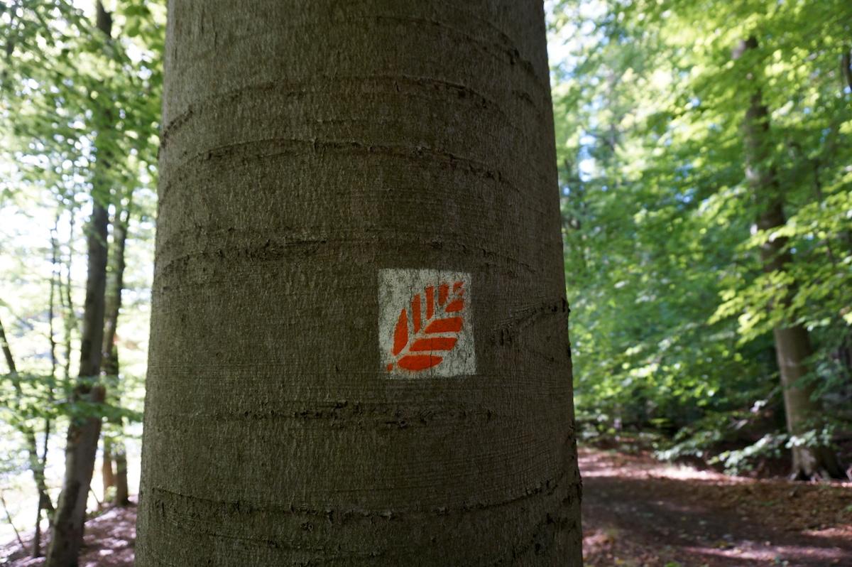UNESCO Weltnatur-Erbe Grumsiner Forst