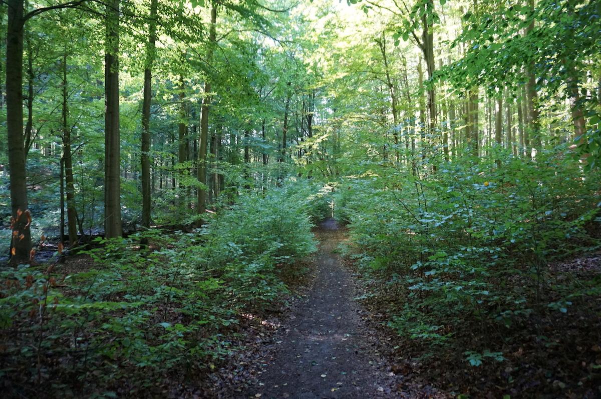 Wandern im Weltnaturerbe Grumsiner Forst