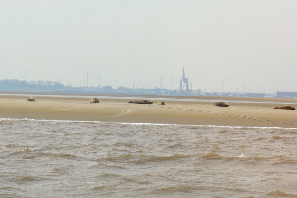 Seehundbänke vor Cuxhaven, Familienurlaub