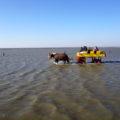 Wattwagenfahrt Cuxhaven, Familienurlaub