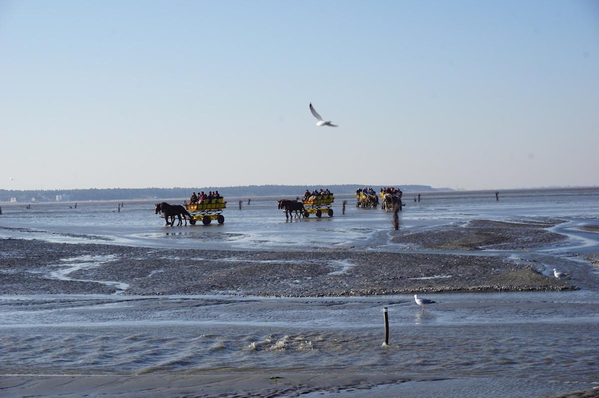 Wattwagenfahrt Cuxhaven
