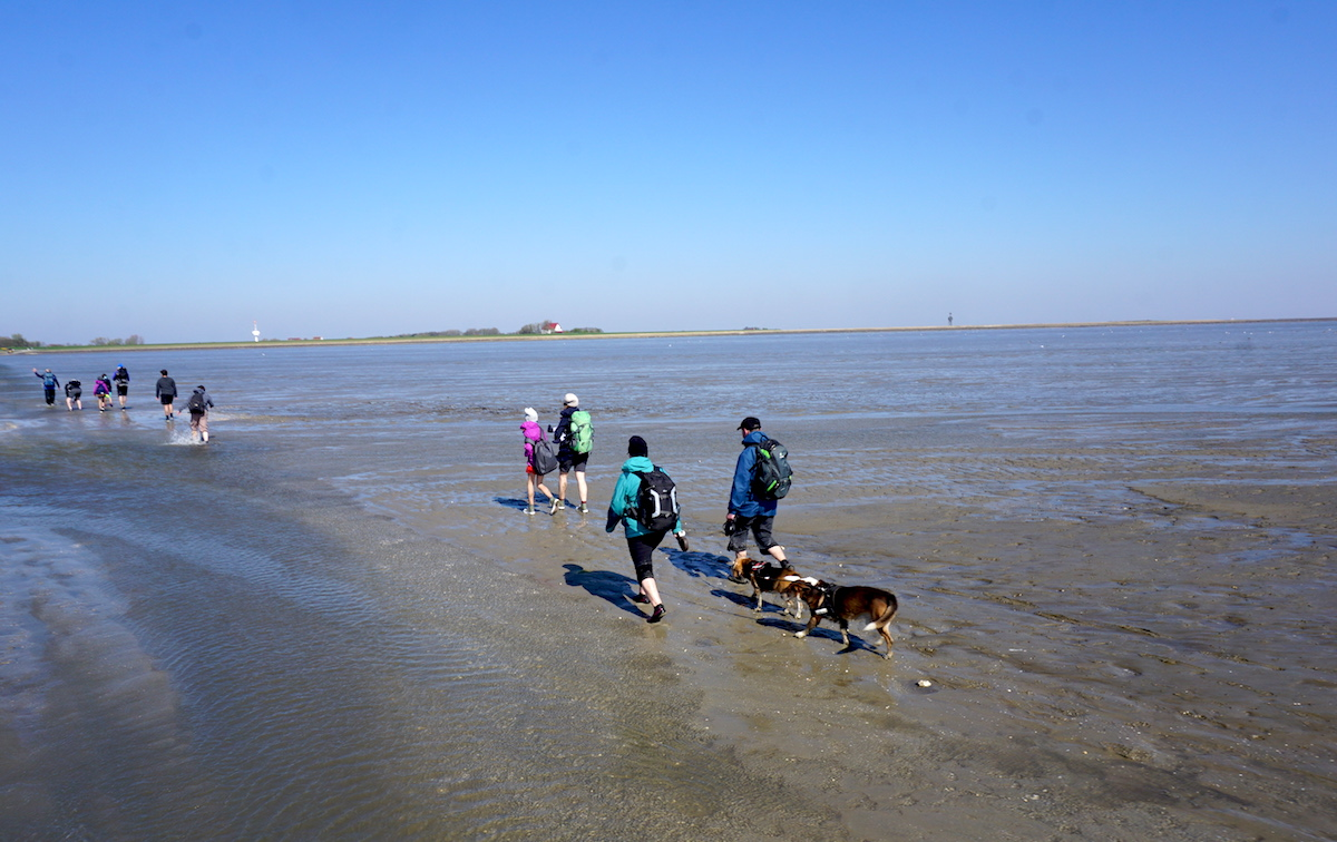 Wattwanderung Cuxhaven Neuwerk