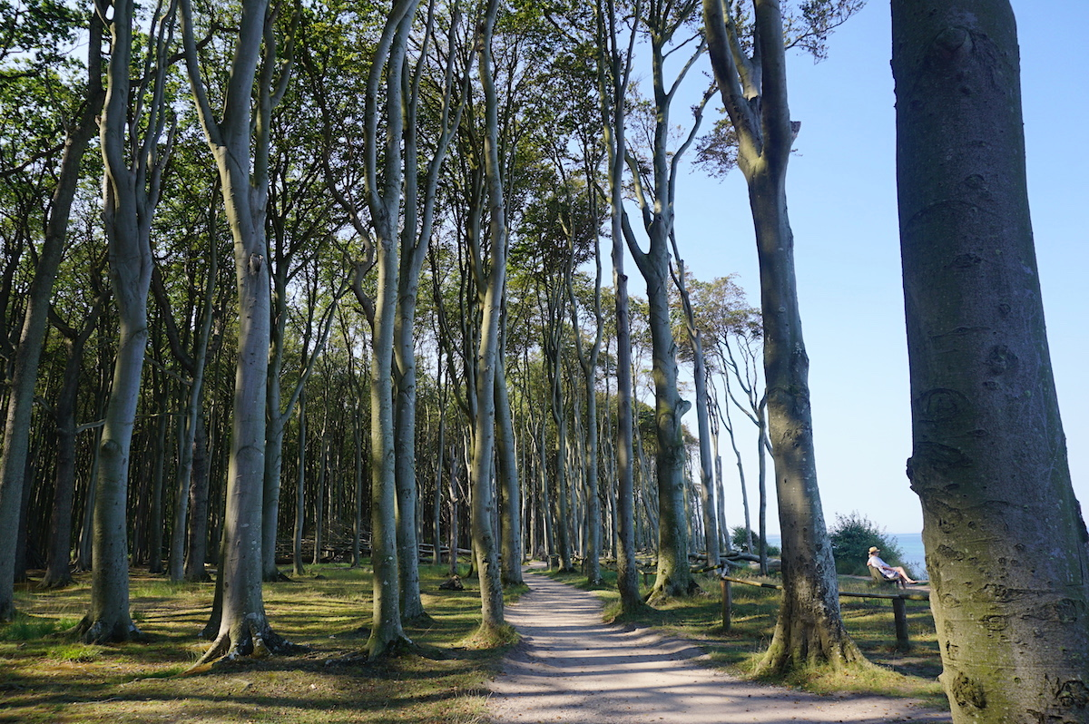 Nienhagen Gespensterwald, Ostseeradweg
