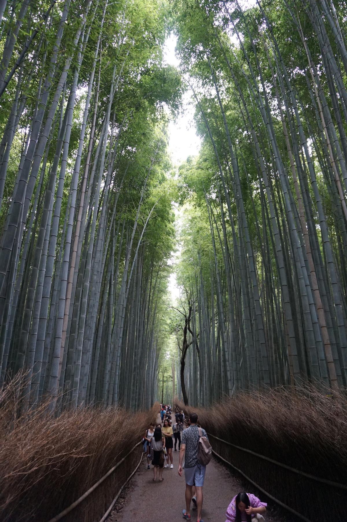 Arashiyama Bambushain, Kyoto
