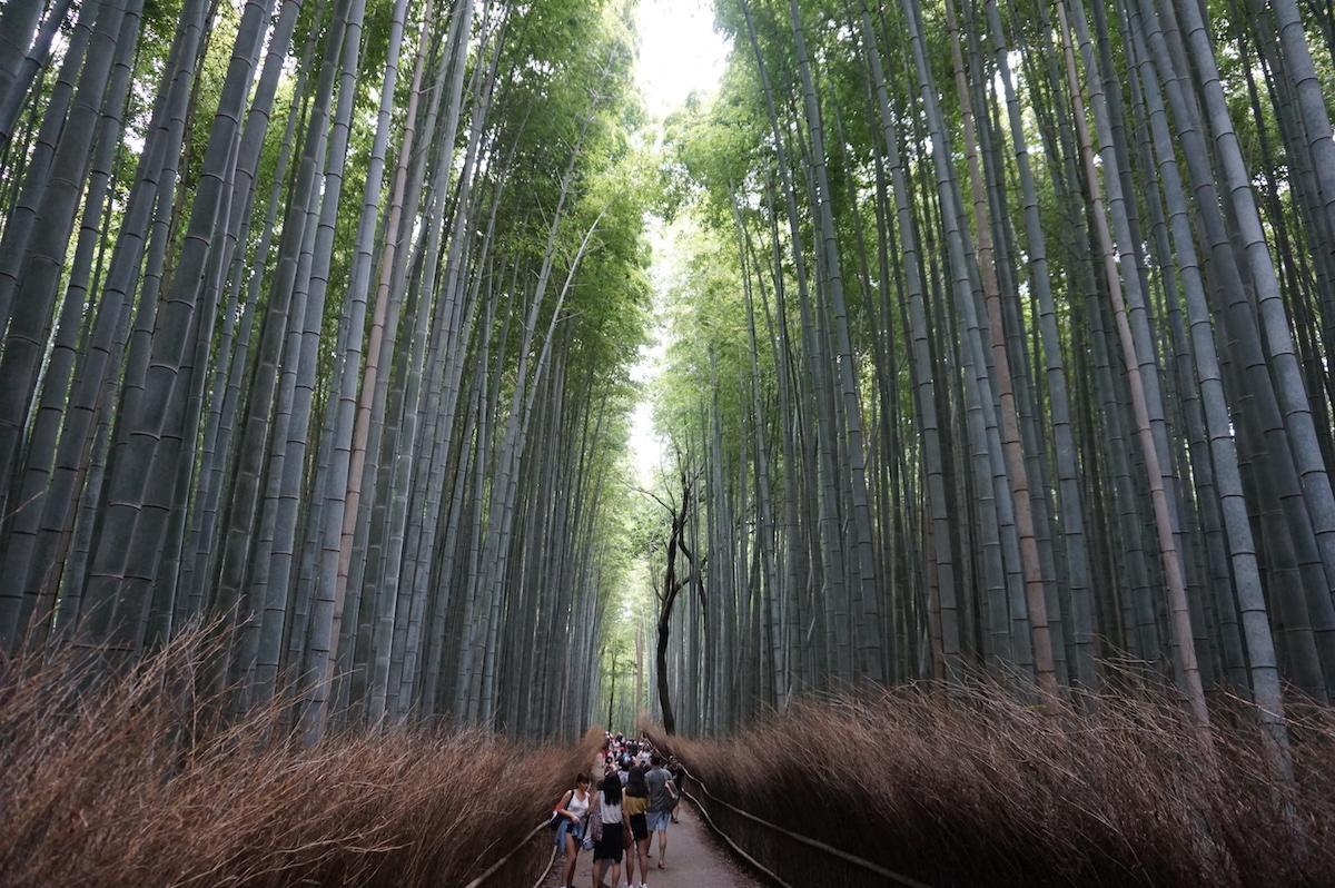 Bambuswald Kyoto, Arashiyama