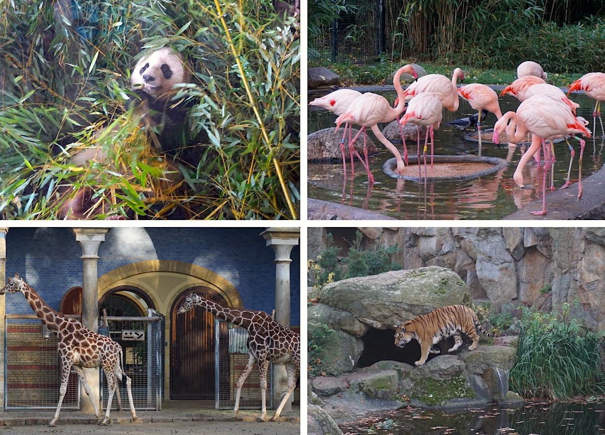 Berliner Zoo_Aktivitäten trotz Corona