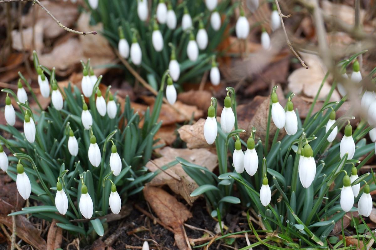 Frühling am Wutzsee Brandenburg